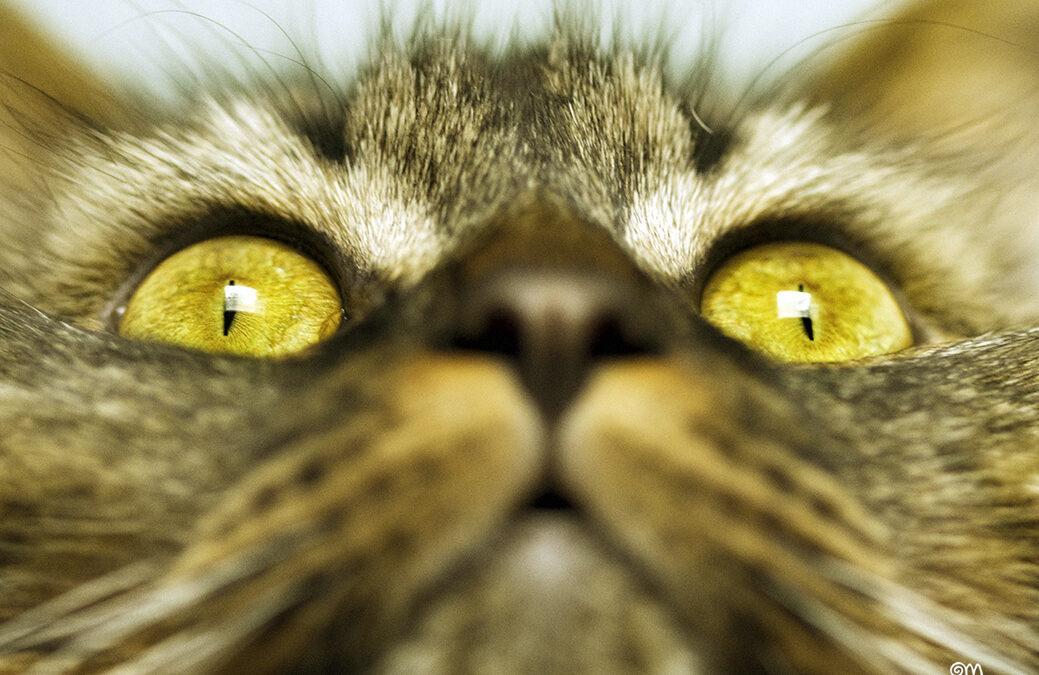 """Fotografia: """"Big Brother"""""""
