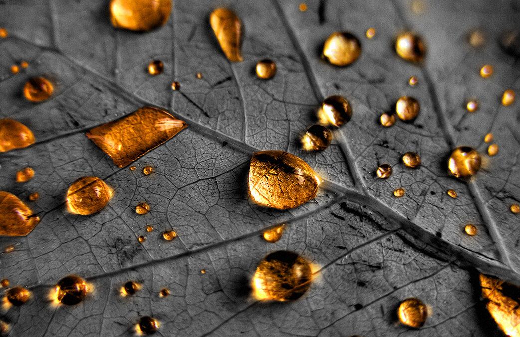 "Fotografia: ""Chuva Dourada"""