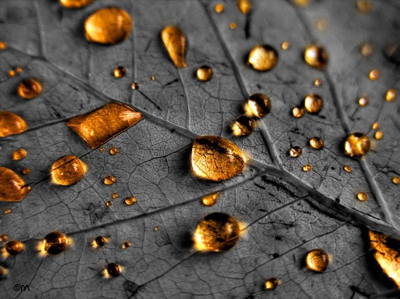Chuva_dourada_fotografia_portfolio