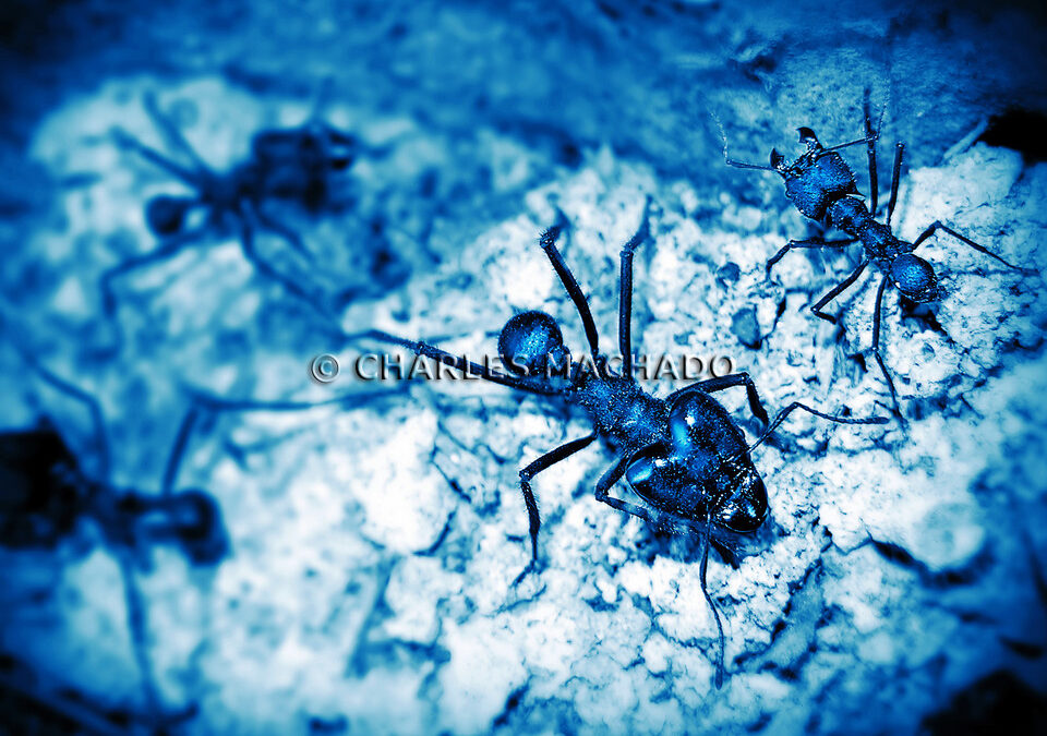 Fotografia criativa – Party of ants